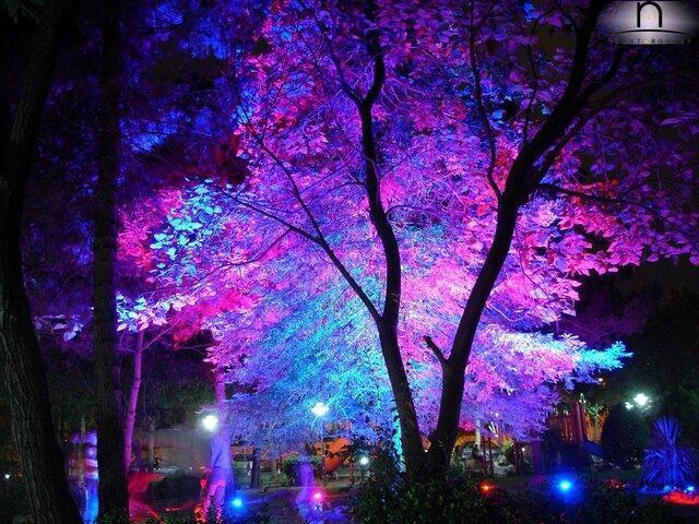 تبعات آلودگی نوری شهرها برای انسان ها و محیط زیست